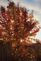 autumn sun... (martinap.1) Tags: nikon d3300 1855mm nature sun sonne herbst autumn