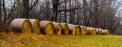 Wet Hay Rolls  *Explore* (Catskills Photography) Tags: odc allinarow hayrolls field farm rural country countryside canon24mmf28stmlens sullivancounty