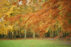 Autumn (Ronaldc5) Tags: sony a99ii helios 442 mushroom autumn poelgeest