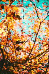 @FYABRIANSCOTT (fya_brianscott) Tags: travek travel nature hiking world earth woods beauty beaut beautiful contrast tones sky blue ornage stained glass mood feeling nikon abstract frame branches trees looking up spiritual outside