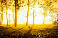 _DSC0411 (Marco Sky) Tags: nikon d5300 light silhouette tree shadow park poniatowskiego night overexposure yellow black lodz d
