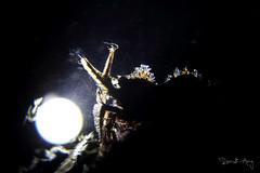 On The Stage (Randi Ang) Tags: marbleshrimp marble shrimp saronmarmoratus saron marmoratus tulamben bali indonesia underwater scuba diving dive photography macro randi ang canon eos 6d 100mm randiang