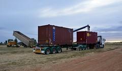 Arnold (quarterdeck888) Tags: trucks transport semi class8 overtheroad lorry heavyhaulage cartage haulage bigrig jerilderietrucks jerilderietruckphotos nikon d7100 frosty flickr quarterdeck quarterdeckphotos roadtransport highwaytrucks australiantransport australiantrucks aussietrucks heavyvehicle express expressfreight logistics freightmanagement outbacktrucks truckies container arnolds man tipper grain export canola