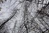 Interférence (Bo No Bo) Tags: d7100 montréal québec parcnatureduboisdeliesse boisdeliesse parc park extérieur outdoors ville city urbain urban automne fall bois wood arbre tree jour day nuageux cloudy pylône électricité électrique electricity electric pylon branche branch nuage cloud gris grey tower tour towering big grand lignes lines ligne line fil wire