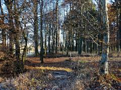Bruchsaler Hgelland im November (infactoweb) Tags: bruchsal eichelberg obergrombach wandern kraichgau infactoweb hgel hgelland