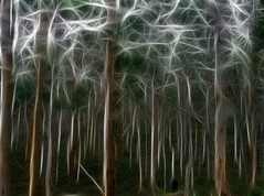 ghost trees (-hedgey-) Tags: trees nature flora fractals mygearandme mygearandmepremium mygearandmebronze mygearandmesilver mygearandmegold