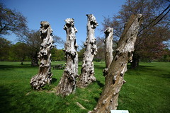 Tree Trunks (bukharov) Tags: trees ontario canada tree gardens burlington botanical spring interesting blossom hamilton columns may shapes royal sunny arboretum trunk trunks has      spring green 2013  grass      sprung