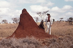 Termite mound, Savannah, Amboseli Reserve, Kenya (Hart Walter) Tags: tourism coffee cattle rice tea goats sunflower sisal camels sugarcane deforestation desertification tef africanlanduse baobabdestruction