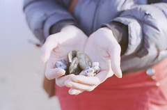 Handful of shells (Yashica Girl) Tags: film aberdeenshire 2012 balmedie