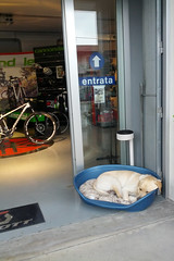 Bike shop dog (bomboloni) Tags: italy bassanodelgrappa fizik