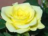 Rose (Gartenzauber) Tags: flower macro garden ngc natur blume garten rosé thegalaxy topshots masterphotos afotando flowersarebeautiful floraandfaunaoftheworld naturesony excellentsflowers natureselegantshots mimamorflowers amazingdetails greatshotss faunayfloradelmundo natureandpeopleinnature theoriginalgoldseal silveramazingdetails goldamazingdetails itsallaboutflowers rosesforeveryone magicmomentsinyourlifelevel1 flowerthequietbeauty onlythebestofflickr lovelynewflickr