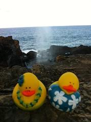 Hawaii-317 (jebigler) Tags: nakaleleblowhole hawaii2013 northeastmaui