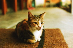 cat! (bebopbeboplomography) Tags: pet film cat 35mm canon indonesia analogue bebop bebopbebop