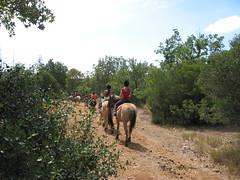 Promenade à cheval - Méjannes-le-Clap