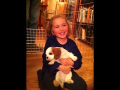 "Granddaughter Kendra playing with puppies. • <a style=""font-size:0.8em;"" href=""https://www.flickr.com/photos/72564046@N04/13911174319/"" target=""_blank"">View on Flickr</a>"