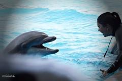 Good Job, Boy! (Haku_Orka) Tags: italy italia dolphin lagoon curioso laguna trainer riccione delfino bottlenose ulisse oltremare tursiope addestratore