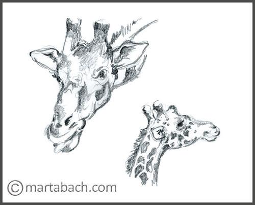 marta_bach-girafes