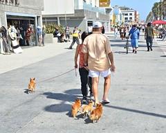 051512-891F (kzzzkc) Tags: california venice usa dogs losangeles nikon couple streetscene oceanfrontwalk d7000