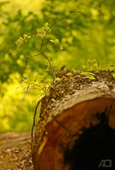 Life (ganglionn) Tags: life trip travel tree green nature forest canon leaf flora bokeh outdoor sigma natura jungle bursa 105mm turkei inegöl 60d