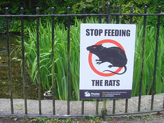 Stop feeding the rats (Tony Worrall) Tags: park county uk england lake water sign danger warning rodent words pond stream tour open place northwest unitedkingdom label country letters north bad visit location lancashire rats badsign signage area preston feed northern update attraction moorpark lancs welovethenorth 2015tonyworrall