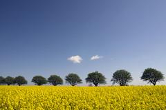 Blue, Green & Yellow (parkerbernd) Tags: blue trees sky green field yellow germany landscape lumix spring balticsea rape panasonic flowering fehmarn springtime blooming gx1