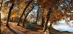 L'automne raconte  la terre les feuilles qu'elle a prtes  l't. (jean paul lesage) Tags: hautesavoie france alpes alps laclman yvoire lachataignre domainederovore conservatoiredulittoral espacenaturel domaineclass chtaigneraie automne couleursdautomne