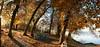 L'automne raconte à la terre les feuilles qu'elle a prêtées à l'été. (jean paul lesage) Tags: hautesavoie france alpes alps lacléman yvoire lachataignère domainederovorée conservatoiredulittoral espacenaturel domaineclassé châtaigneraie automne couleursdautomne