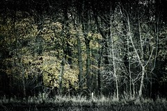 Cotswolds Forest (DS Williams) Tags: cotswolds snowshill desaturate