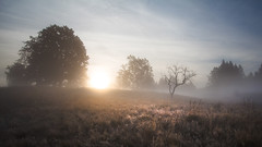 Bkk-fennsk, Nagy-mez (A piece of nature.) Tags: landscape kd fog pra mist tjkp hajnal