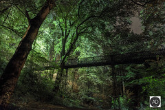 The Dell from nowhere (alun.disley@ntlworld.com) Tags: dell trees nature bridge footbridge night longexposure autumn seasons chester city urbanparks cheshire englanduk parksandopenspaces landscape