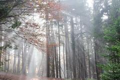 20161030-WOL_7725.jpg (viennalinux) Tags: spaziergang nebel herbst nature tauern fog natur ossiach ossiacher