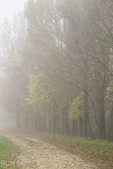 Autumn mood (Rom4rio Photography) Tags: nikon nikkor nikond3100 natura nature amateur amatore allaperto amator outdoor color albero tree copac cea fog nebbia