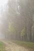 Autumn mood (Rom4rio Photography) Tags: nikon nikkor nikond3100 natura nature amateur amatore allaperto amator outdoor color albero tree copac ceață fog nebbia