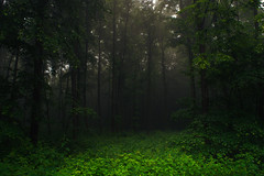 The stage is still empty (Netsrak) Tags: mist fog nebel dunst haze tree trees baum bume wald forst forest woods green grn nature natur outdoor landscape landschaft rheinbach nordrheinwestfalen deutschland de