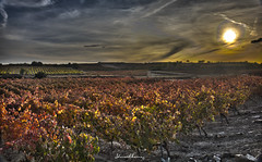 Atardecer en Rioja  HDR.-Sunset in Rioja.  N112 (Yon Ibarrra) Tags: hdr paisaje landscape nature naturaleza vias cepas sarmientos strains branches vines colores colors sun sol cielo sky blue azul nubes clouds rojos naranjas amarillos verdes reds orange yellows green larioja espaa spain europa