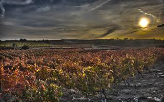 Atardecer en Rioja  HDR.-Sunset in Rioja.  Nº112