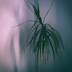 Untitled (Seems every path leads me to nowhere) Tags: plant composition indoor light contrast nature plants geometry shadow lines 6x6 square color colorphotography photography fineartphotography atmosphere shapes colors view naturallight house setting 35mmphotography 35mm silence contemplation