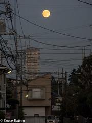 161015 Full moon.jpg (Bruce Batten) Tags: trees locations vehicles automobiles machida nights celestialobjects subjects honshu buildings moon plants urbanscenery tokyo japan