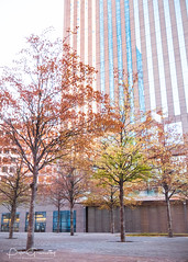 Urban Trees Surrounded By Office Blocks (Peter Greenway) Tags: towerblock architecture parisien businessbuilding officeblock reflection paris urban trees modernarchitecture reflective france