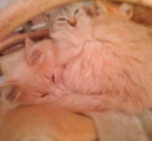 #cats #gatti
