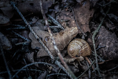 Abandoned (Petr Skora) Tags: les ulita zem zve nature forest ground conch shell snail animal cold