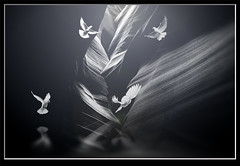 Photo artistry - doves in the canyon (mcleod.robbie) Tags: black white bw doves canyon fine art