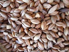 PILI NUTS (PINOY PHOTOGRAPHER) Tags: daraga albay bicol bicolandia pili nut luzon philippines asia world sorsogon