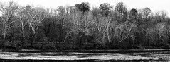 Trees Along the Allegheny River _ bw (Joe Josephs: 2,861,655 views - thank you) Tags: westvirginia landscape landscapephotography outdoorphotography waterfront waterways america fineartphotography americana water hiking fineartprints waterreflections alleghenyriver river rivers travel travelphotography landscapes blackandwhitephotography blackandwhite