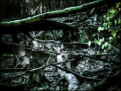 20161112-082 (sulamith.sallmann) Tags: landschaft natur pflanzen ast baumstamm düster finster landscape nature plants unheimlich äste brandenburg deutschland deu sulamithsallmann