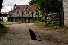 (Laszlo Papinot) Tags: eltham montsalvat famousflickrfive garden cat gate house