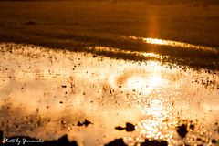 (yomoneko1) Tags: sunset autumn sony α700 135mm zeiss