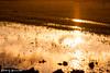 (yomoneko1) Tags: sunset autumn sony α700 135mm zeiss