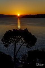 sunrise over the lake (Tiziano Photography) Tags: sal gardalake sunrise tree lake sky colors nikond750 d750 nikon lagodigarda alba sun sole lago cielo colore landscape paesaggio