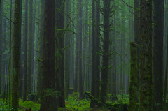 Hidden Ways (Kristian Francke) Tags: forest tree trees green bark leaves plant plants moss mossy floor pentax bc canada british columbia golden ears provincial park helios 44k4 zenit fog mist november 2016 15